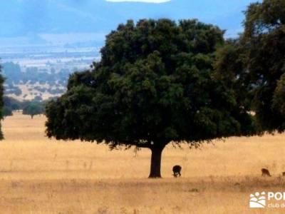 Berrea del Ciervo en Cabañeros y Montes de Toledo en 4x4;excursiones fin de semana rutas senderismo